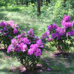 Ana Kruschke Plant